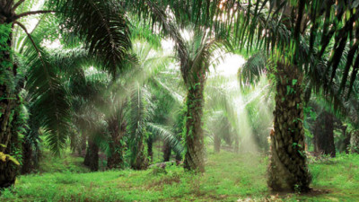 CPG Giants, NGOs, Traders Agree on Unifying Definition of 'No Deforestation' Palm Oil