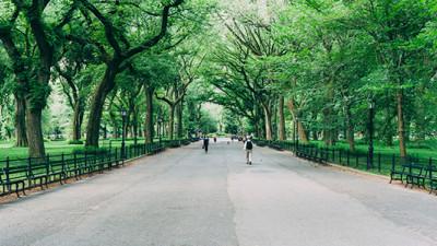 New York City's Street Tree Map Proves Ecological, Economic Benefits of Urban Greenery