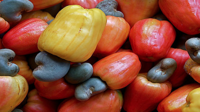 Cashew Nut Byproduct Could Help Trap Tsetse Fly, Create New Value for African Farmers