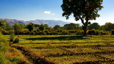 Timberland Reforestation Program Slowly Sowing Seeds of Change in Haiti
