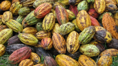 Hershey Exceeds Sustainable Cocoa Goals in 2014, Sets New Targets