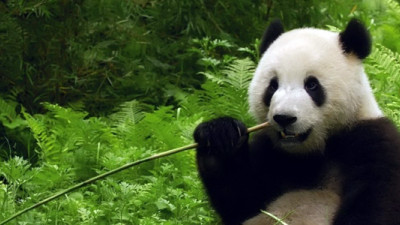 Next-Gen ERP: Managing … and Saving the Panda Bears?