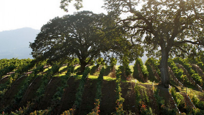 Sonoma Winegrowers Create Business Plan to Preserve Agriculture for Next 100 Years