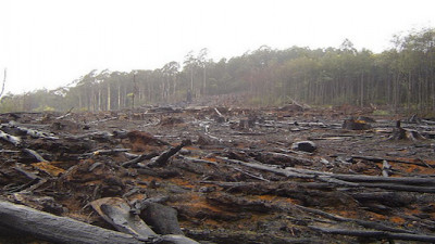 Danone, Unilever Among 6 Major Companies With Comprehensive Deforestation Policies