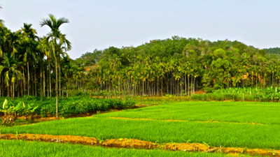 Past, Present and Future: The Road to a Sustainable Agricultural Sector
