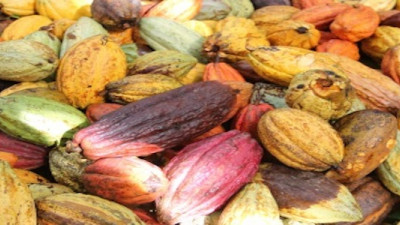 Mars and Fairtrade Extend Sustainable Cocoa Partnership for UK and Ireland