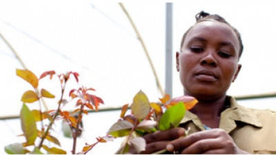 How to Empower Women in Global Supply Chains?