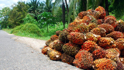 RSPO Cleans House of Companies Failing to Meet Standards; NGOs Applaud
