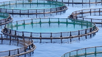Sustainable Aquaculture Innovations Transform Global Fisheries and Address Supply Challenges