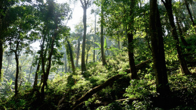 SCS Global Services Certifies One of the Largest Forest Areas in South Asia Under FSC Standard
