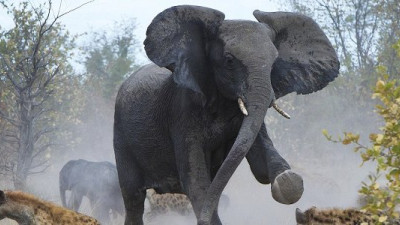 Context, Business Risk & Stampeding Black Elephants