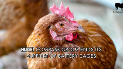 Humane League Campaigns Prompt Sweeping Improvements to Animal Welfare in Food Industry