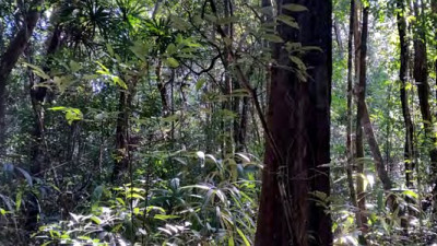 Trending: NGOs, Brands, Suppliers Making Deforestation-Free Plantations, Packaging a Reality