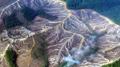 Paper: Definition, Focus, Accountability Needed to Turn Deforestation Commitments Into Action