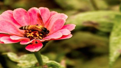 Survey: U.S. Beekeepers Lost 40% of Bees in 2014