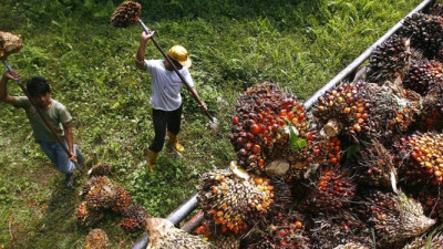 Mars, J&J, P&G and a Dozen Other Consumer Brands Join Investors in Pressing RSPO for Stricter Standards