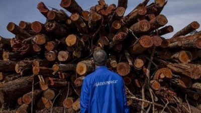 Indonesian Pulp and Paper Giant APRIL Pledges Zero Deforestation, Greenpeace Applauds