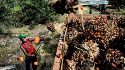 FDA Bans Trans Fats: What Does This Mean for Palm Oil Consumption in the US?