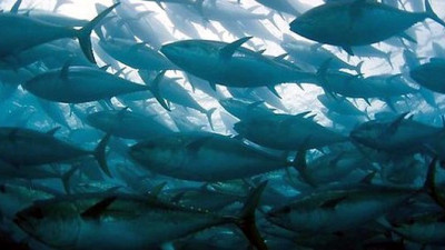 Top Mexican Companies Will Abstain from Fishing Pacific Bluefin Tuna Until 2020