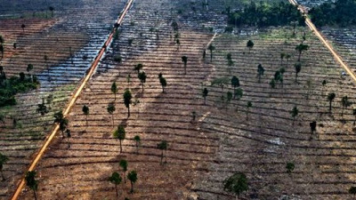 The Business Case for Zero Deforestation