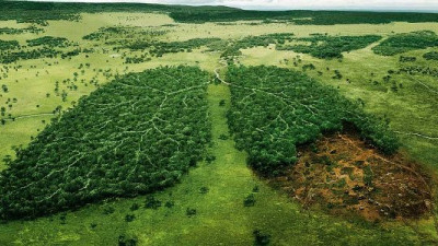 WWF, Unilever Partnering to Engage Consumers on Deforestation, Help Protect 1M Trees