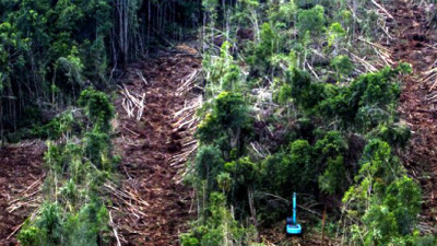 Asia Pulp & Paper Retiring Commercial Plantations to Protect Tropical Peatlands