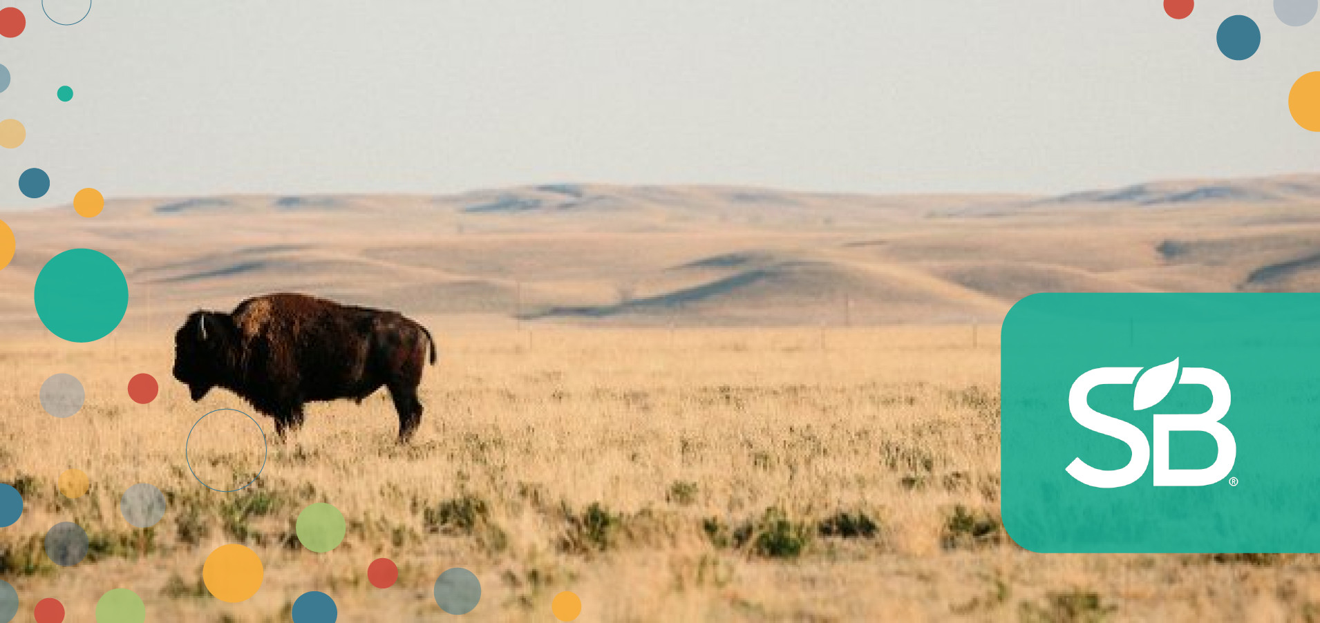 Patagonia Partners With Buffalo Ranchers to Restore Great Plains