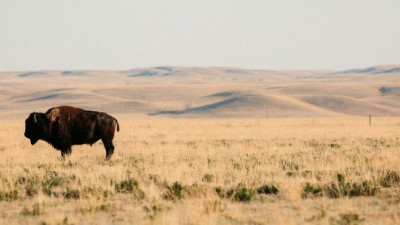 Patagonia Partners With Buffalo Ranchers to Restore Great Plains, Produce Sustainable Jerky