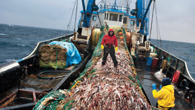 MSC Pilots Seafood Traceability Tool, Asks for Industry Feedback