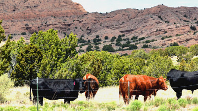 Q&A: A Cattle Rancher Shares Her Beef with Food Labeling