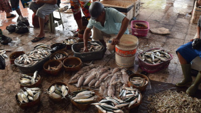 Plastic, Other Man-Made Fibers Found in a Quarter of Fish Sold at Markets