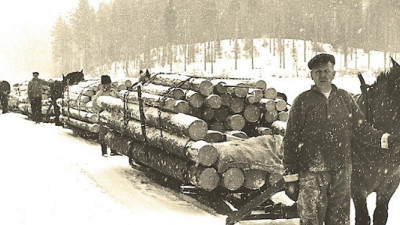 7 Things You Probably Didn't Know About Sweden's Forest Economy