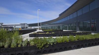 Farm-to-Air Fresh: JetBlue, TERRA Launch Blue Potato Farm at JFK Terminal 5