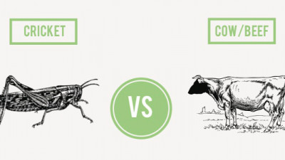 How Do Crickets and Algae Stack Up Against Beef?