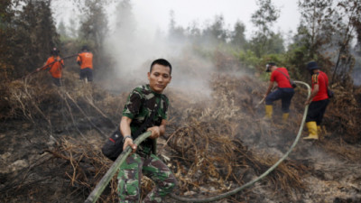 Palm Oil Giant Commits to Help Indonesia Through Peatland Rehabilitation, Traceability