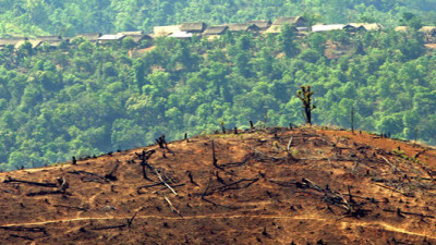 Danone, Nestlé Lead on Zero Deforestation Commitments, But Many Firms Lagging