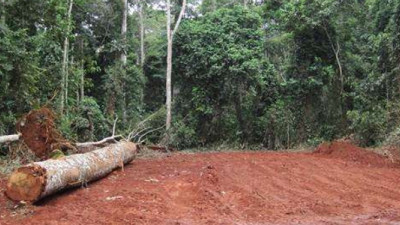 Study: Sustainable Forestry Policies May Lead to Increased Deforestation