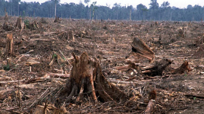 WBCSD Threatens to Expel APRIL Unless It Proves It Has Ended Deforestation Practices