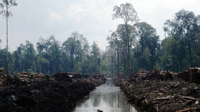 NGOs Weigh In on APRIL's Spotty New Sustainable Forest Management Policy