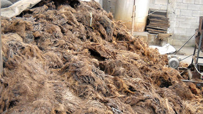 Thai Pulp Company Creating High-Quality Paper from Palm Oil Waste