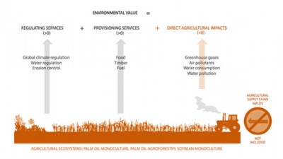 New Study Illustrates Higher Natural Capital Value of Agrofrestry vs. Monoculture