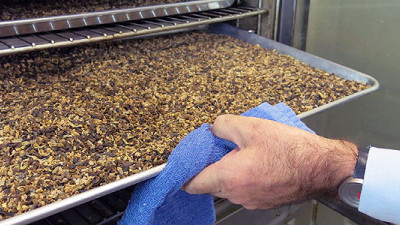 Company Reducing Waste, Advancing Sustainable Seafood with Fly Larvae