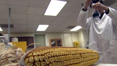 University of Nebraska Engineers Creating Textiles from Corn Husks