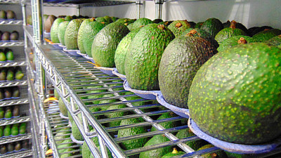 Trending: ¡Yappah!, Apeel Avocados, Taylor Farms Continue Food Waste Fight