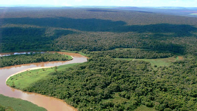 Trending: New Partnerships Grow Reforestation, Research, Offset Programs in South America