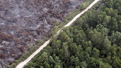 Getting to Zero: Multiple Sectors Convene Around Deforestation at SB '14 San Diego