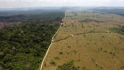 Brazil Releases Forest Reference Emission Level Assessment, Kickstarting Participation in REDD+