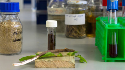 Biome Research Confirms Next-Generation Bioplastics Could Be Derived from Trees