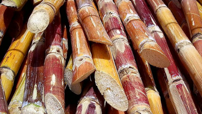 New Projects in Guatemala, Australia Sweetening Sugar Industry Sustainability Practices