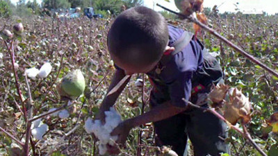 IKEA Expands Program to Prevent Child Labor in India's Cotton Fields